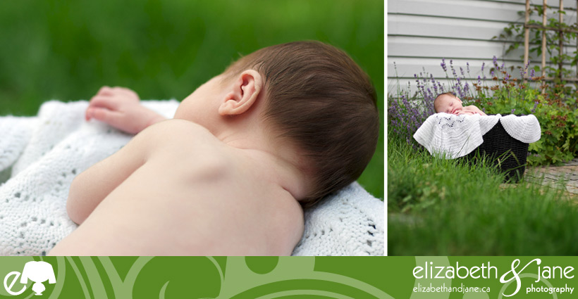 Newborn Photos: two images of a sleeping baby boy in a black basket with a white blanket, outside in the garden with lots of greenery and purple flowers