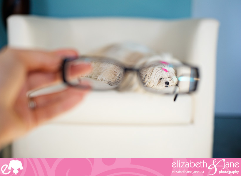 Dog photo: a cute Maltese/ShihTzu dog lays on a couch photographed through glasses