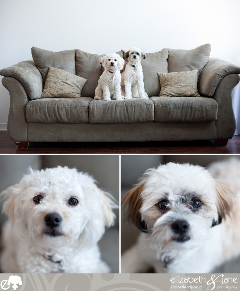 Dog photo: two dogs sitting together on a couch