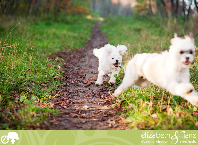 Dog photo: dogs running and playing at Conroy Pit