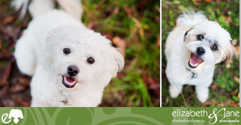 Dog photo: dog headshots