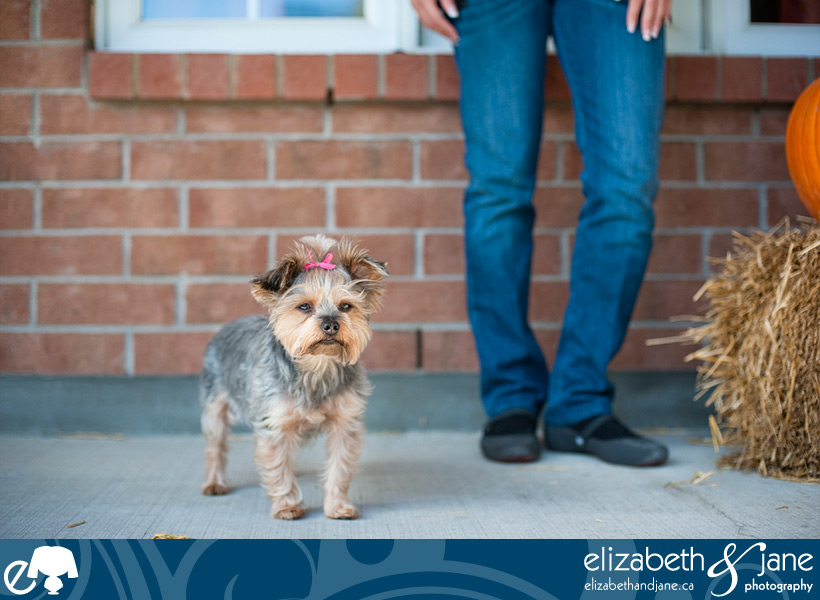 Dog photo: Yorkie standing with owner