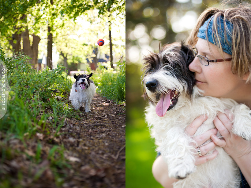 Dog photo: Scruffy a rescue dog plays with his ball and loves his human