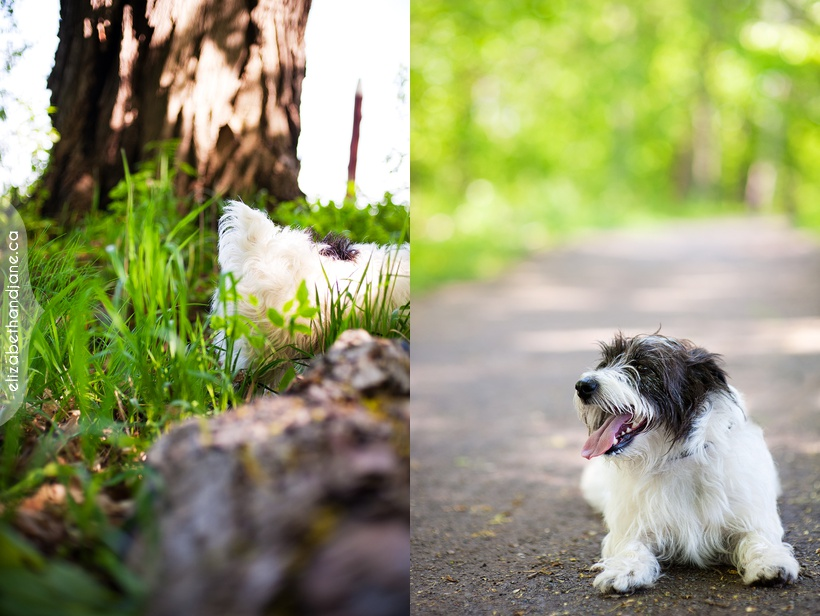 Ottawa dog photographer scruffy 04