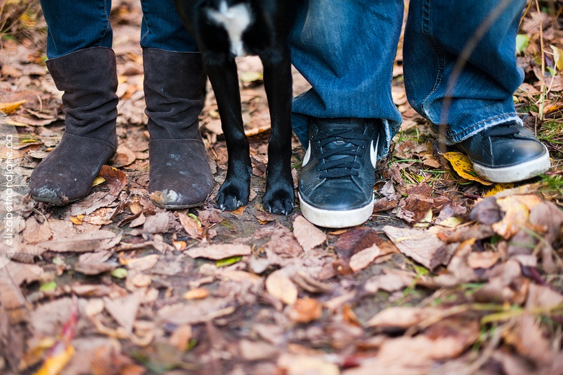 Ottawa dog photographer elizabethandjane bailey sneakpeek 02