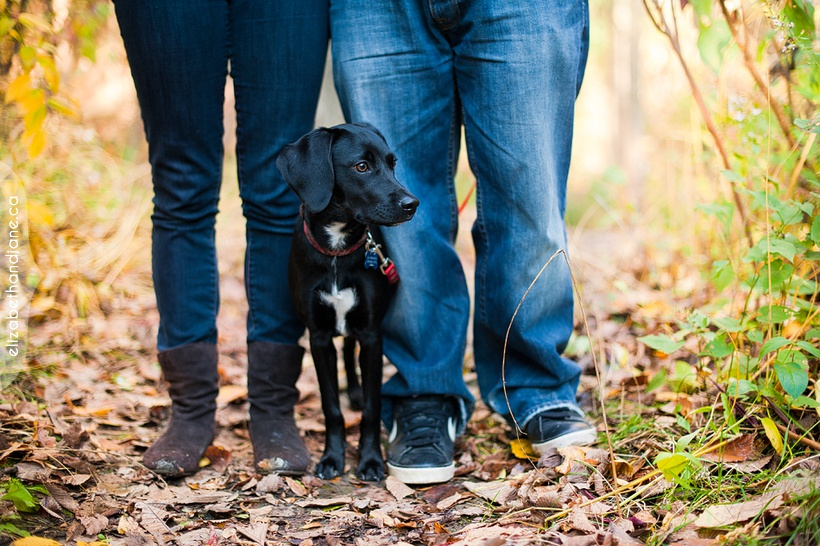 Ottawa dog photographer elizabethandjane bailey sneakpeek 03