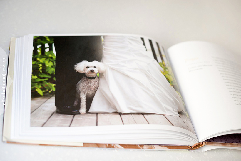 Published in Wedding Dogs 05