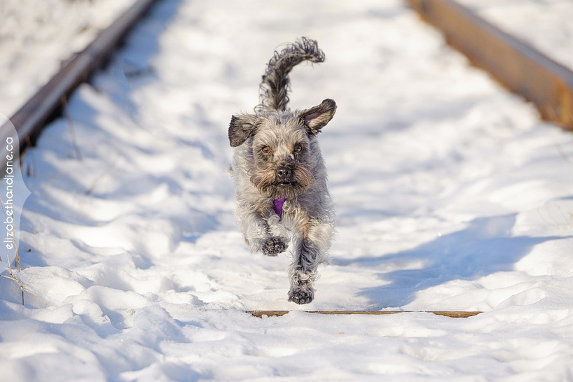 Dog and Cat photography in Ottawa in the winter photographed by Liz Bradley of elizabeth&jane photography