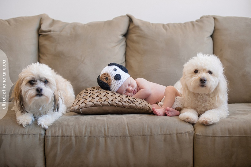 Eddie's newborn session in Ottawa with dogs photographed by Liz Bradley of elizabeth&jane photography