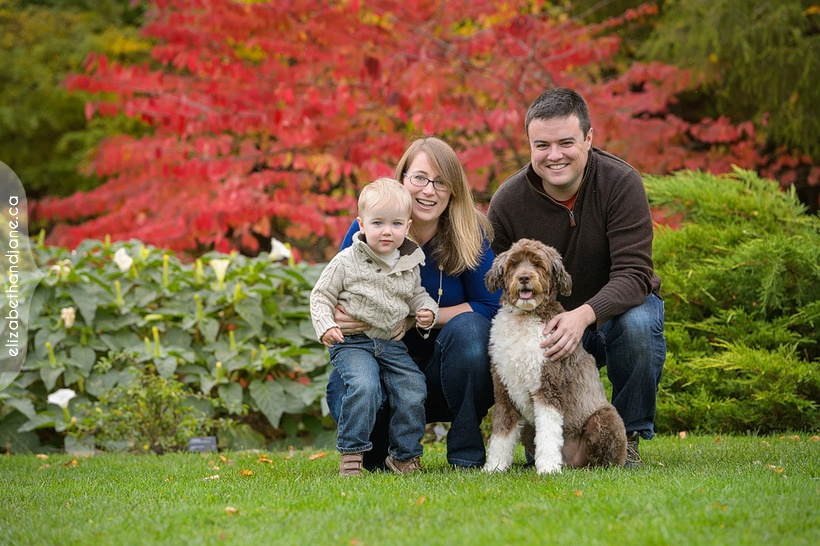 Audrey, Francois ,Oliver & Clio the Dogs photographed in Ottawa by Liz Bradley of elizabeth&jane photography