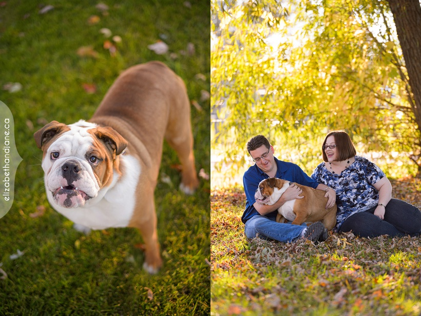 Harley the Bull Dog photographed in Ottawa by Liz Bradley of elizabeth&jane photography
