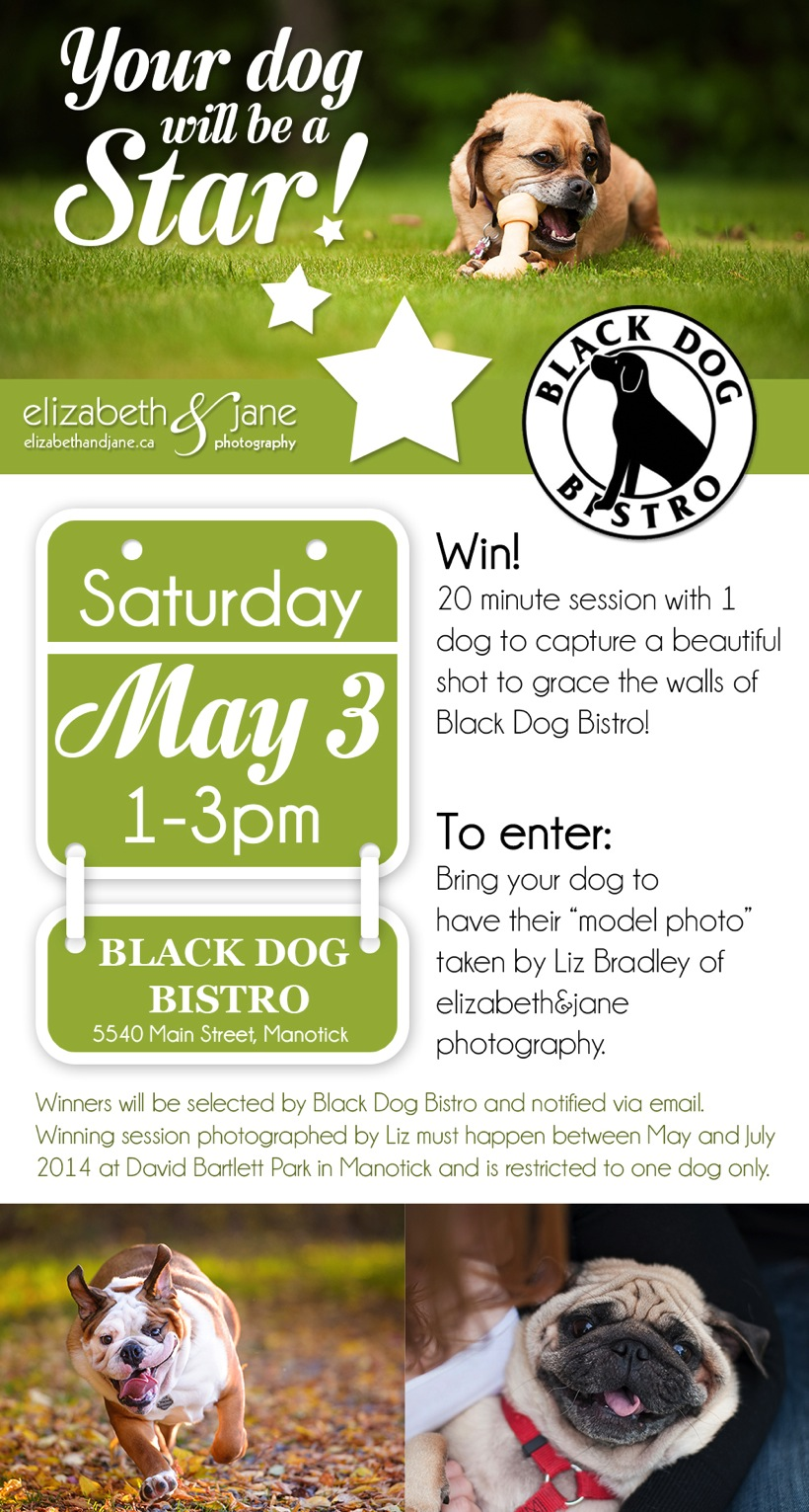 Your dog could be a star at Black Dog Bistro