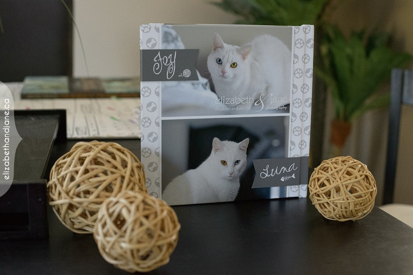 Denver, Hitch, Luna and Fey's Products by Liz Bradley at elizabeth&jane photography