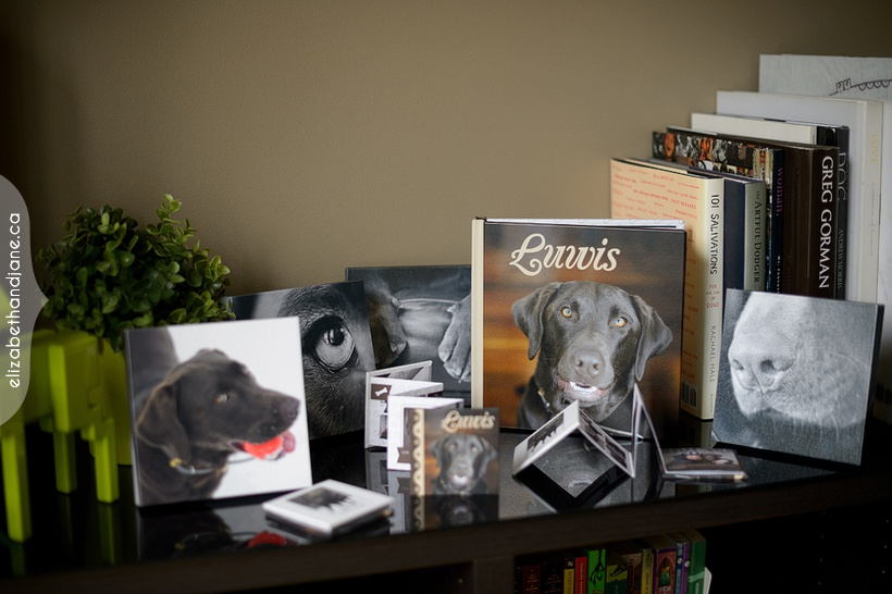 Luwis' photography products by Liz Bradley of elizabeth&jane photography