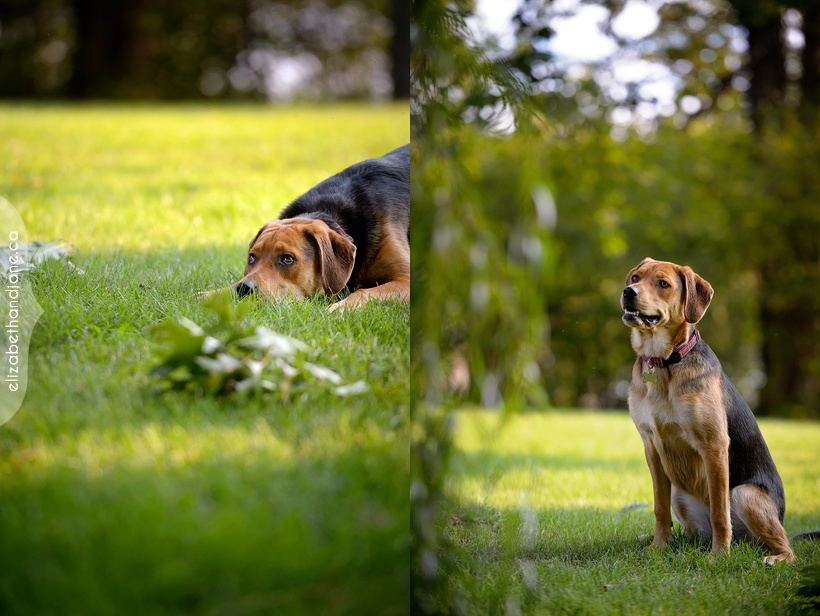 Reese the dog photographed in Ottawa by Liz Bradley of elizabeth&jane photography