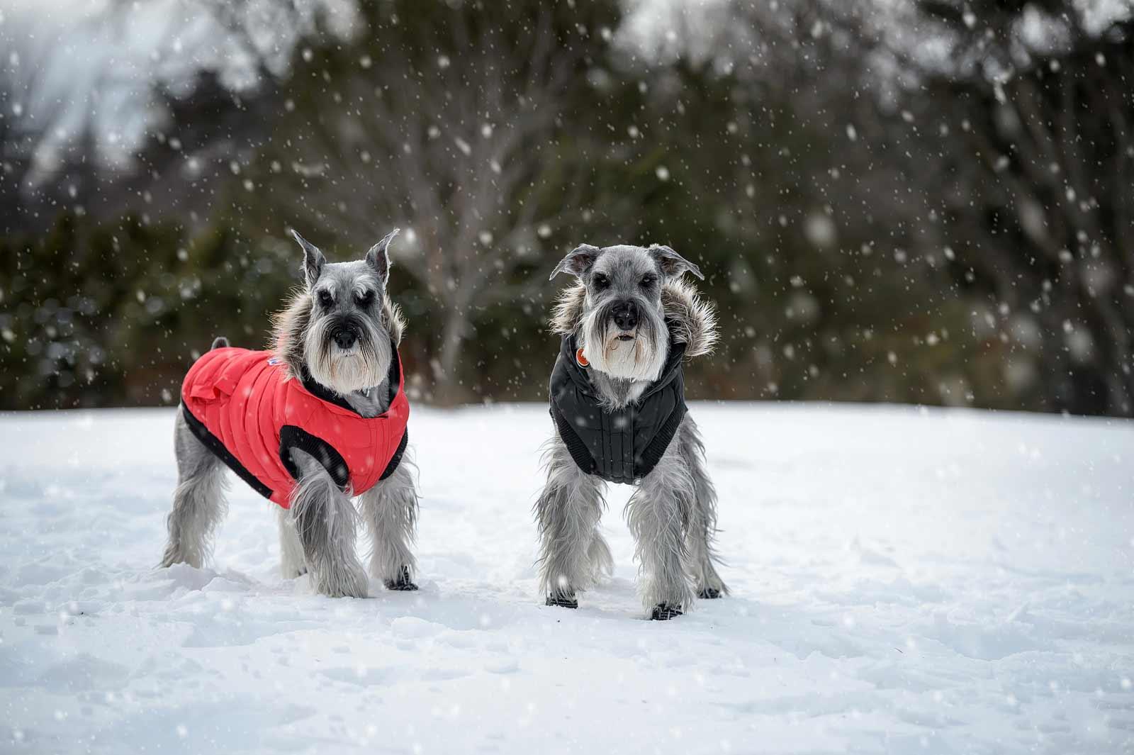 HugoCleo-Winter-011-snow