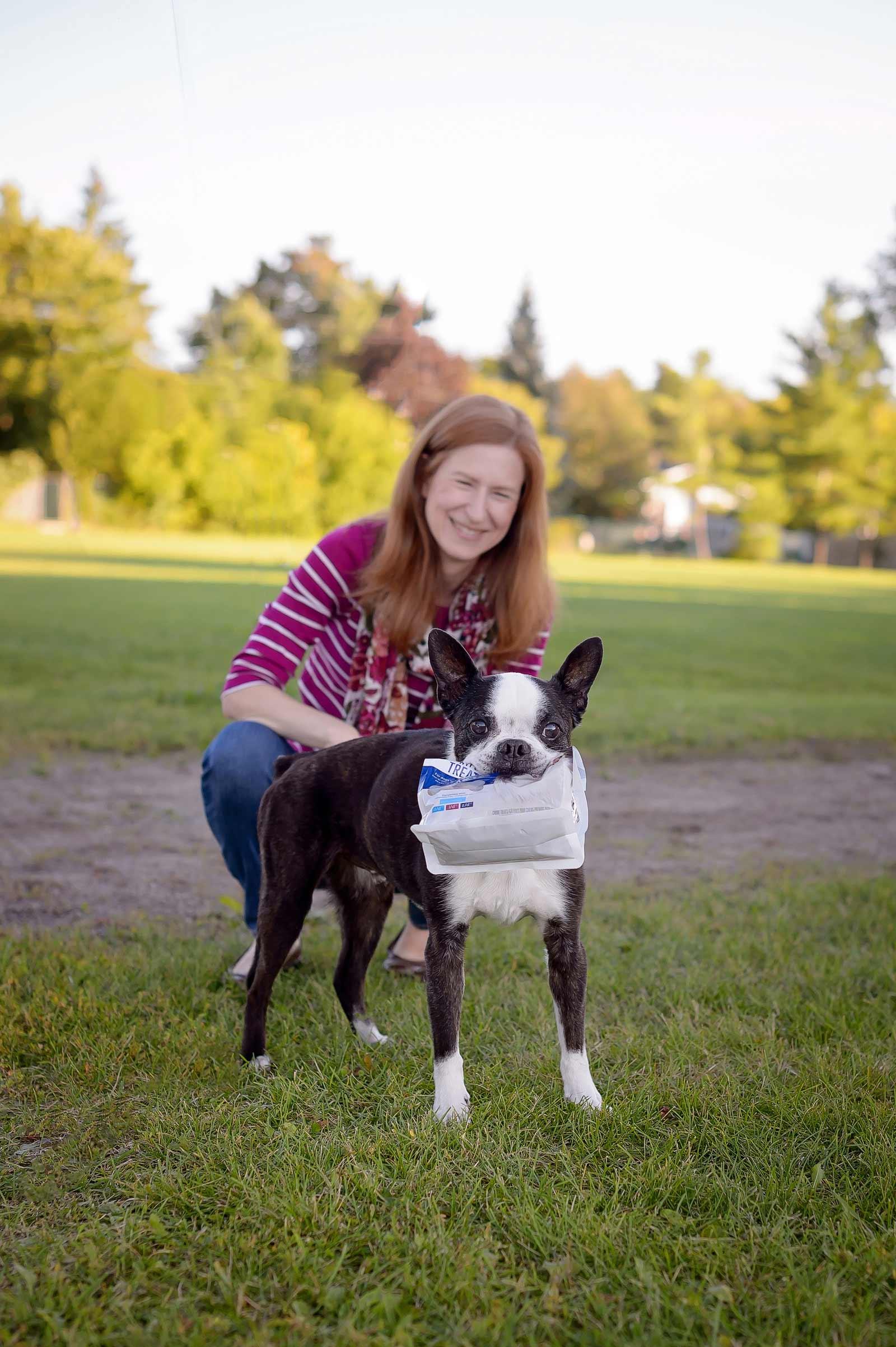 Henry-Chloe-boston-terriers-sneakpeek-01