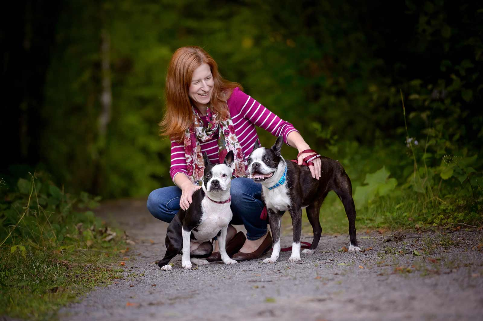 Henry-Chloe-boston-terriers-sneakpeek-11