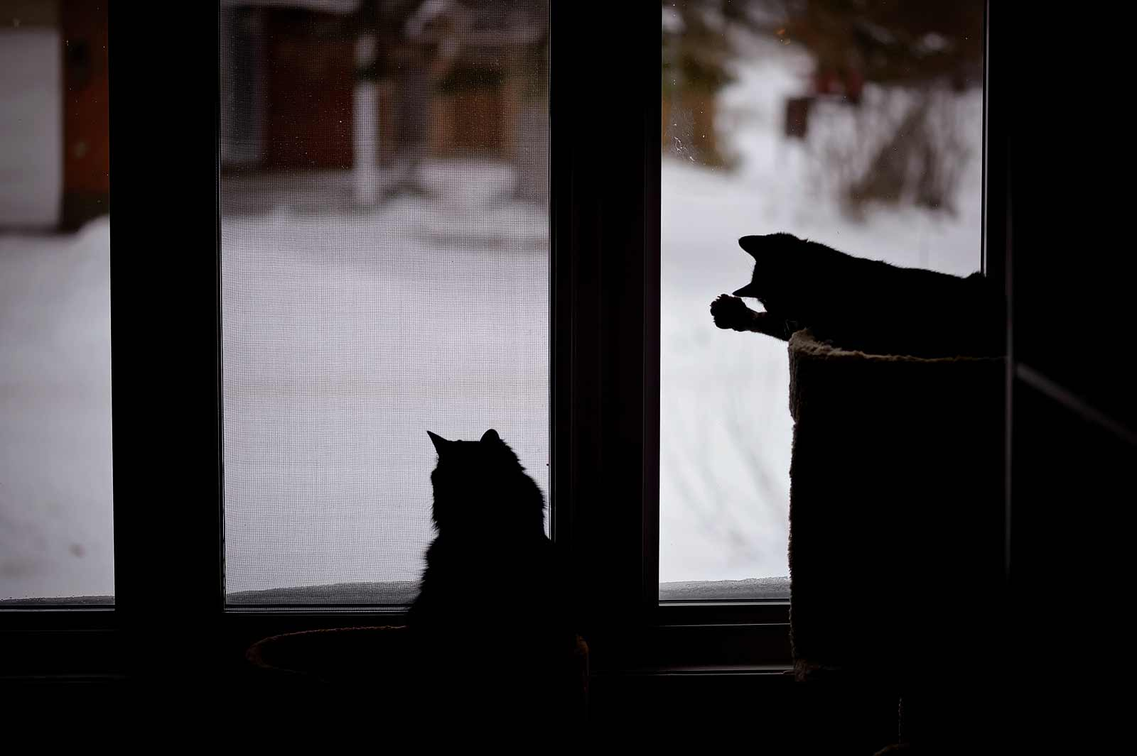 Two cats watching from the window on a snowy day