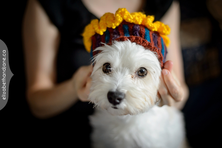 Small dog with a flower hat